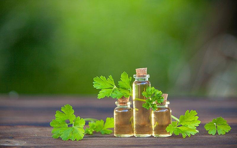 vertus-huile-essentielle-persil